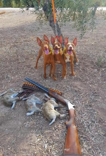 Hunting Spain 14