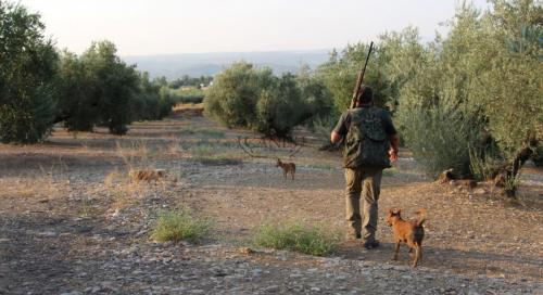 Canes bespoke hunting Spain (3)