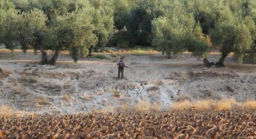 Canes bespoke hunting Spain (5)